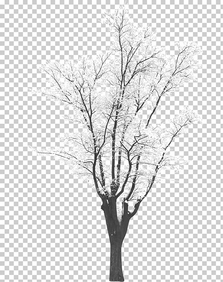 Snow Tree , Winter trees PNG clipart.