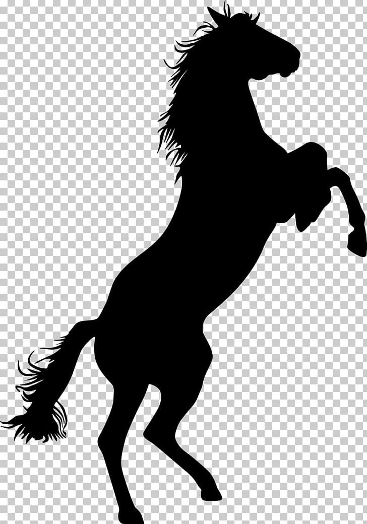 Mustang Standing Horse Bronco Equestrian PNG, Clipart.