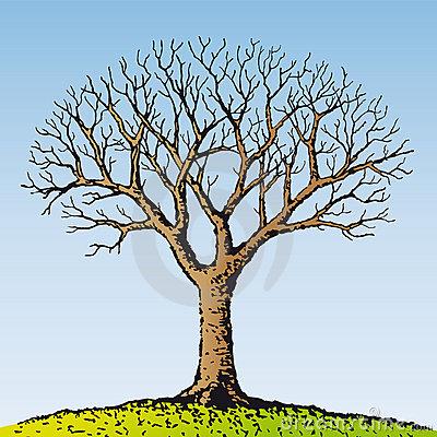 Bare Tree Silhouette Stock Illustrations.