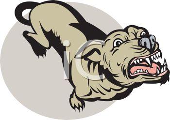 Vicious pit bull dog baring its teeth.