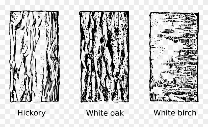 Tree Bark Clipart.