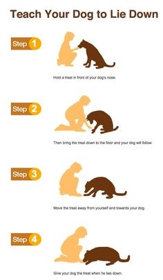 Dog Training Tricks Dogs.