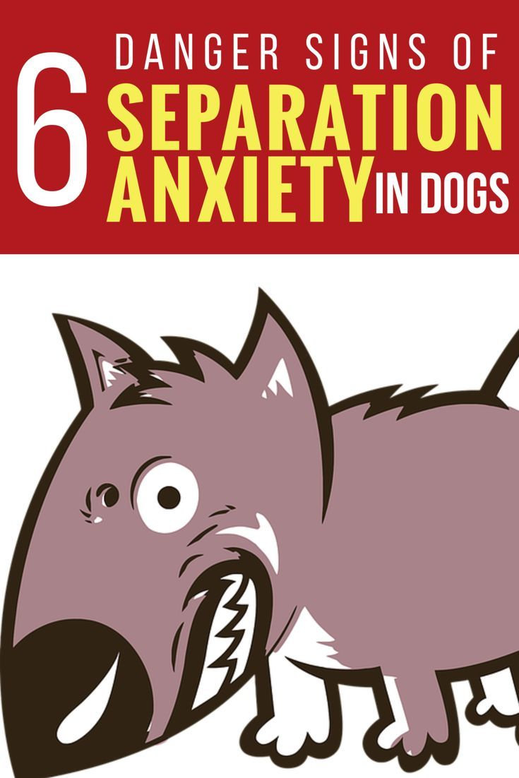 1000+ images about Dog Problems on Pinterest.