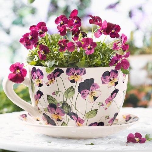 1000+ images about Violets on Pinterest.