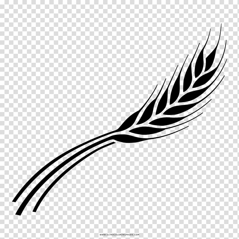 Barley Drawing Line art Black and white Coloring book.