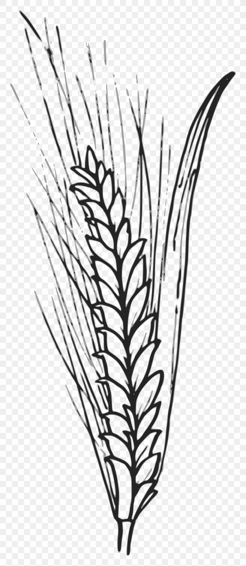 Wheat Grain Cereal Clip Art, PNG, 1045x2400px, Wheat.