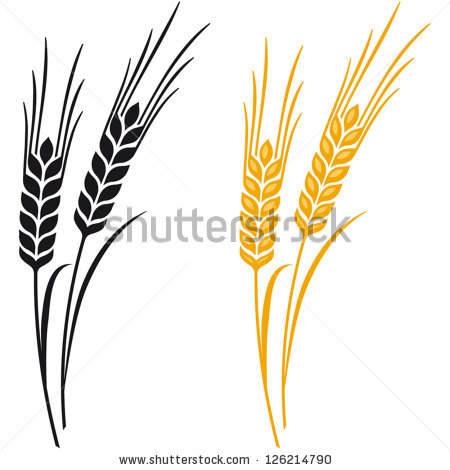 Wheat spike clipart #7