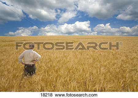 Pictures of Farmer standing in barley field 18218.