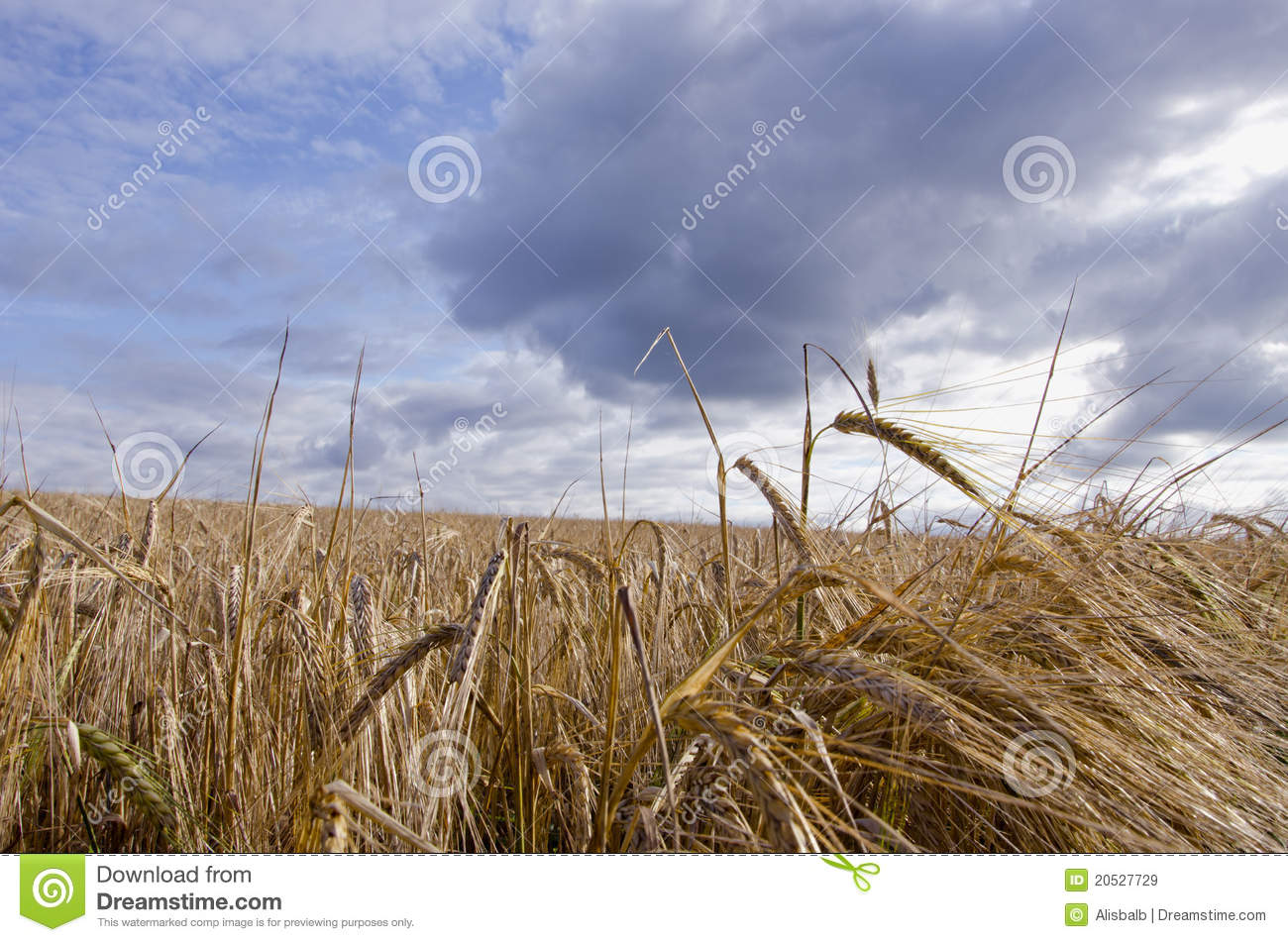 Harvest Field Clipart.