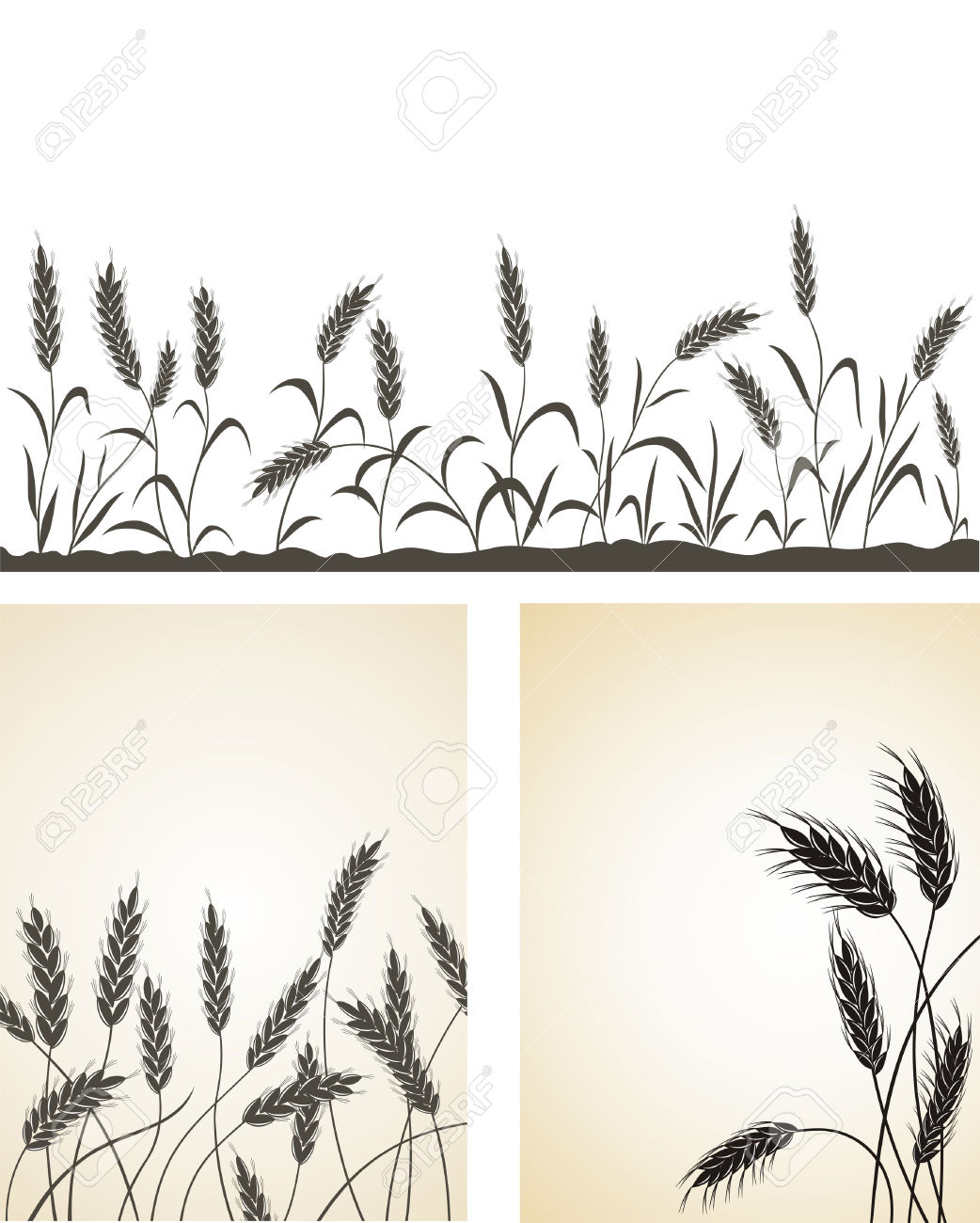 Grain Ears. Royalty Free Cliparts, Vectors, And Stock Illustration.