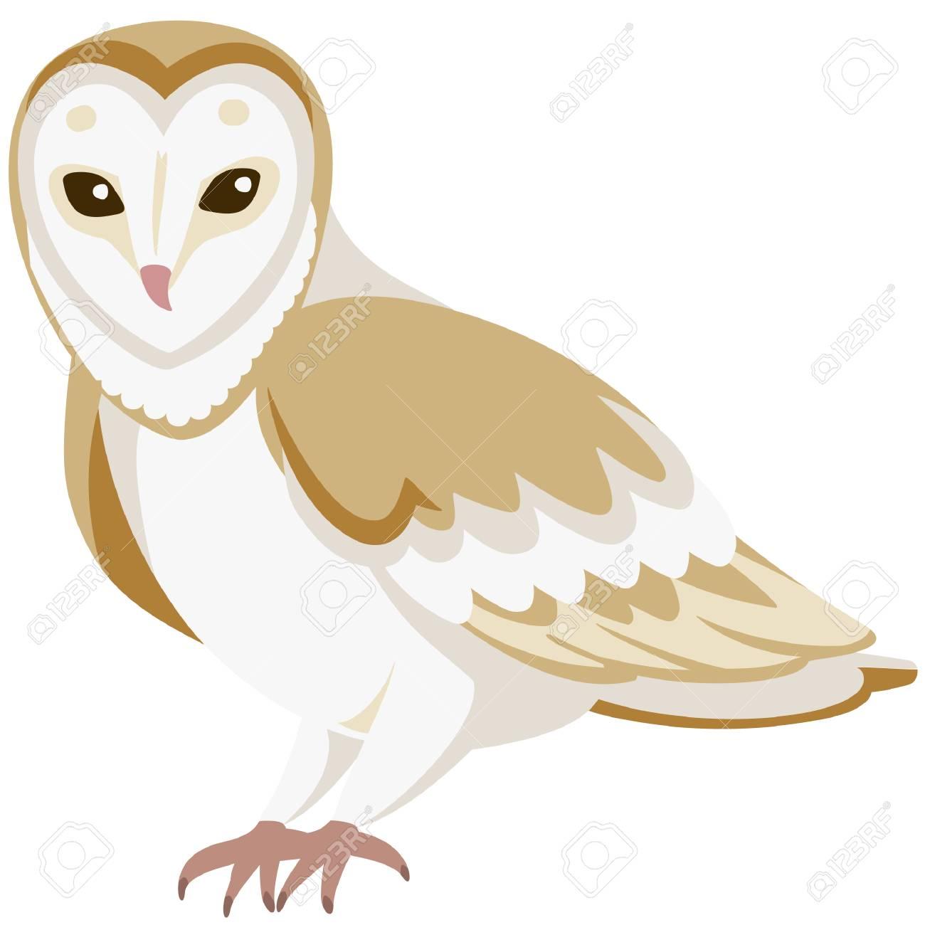 vector cartoon barn owl sitting quietly.