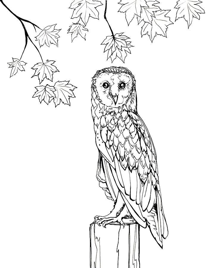 Autumn Barn Owl Line Art by Katherine Nutt.