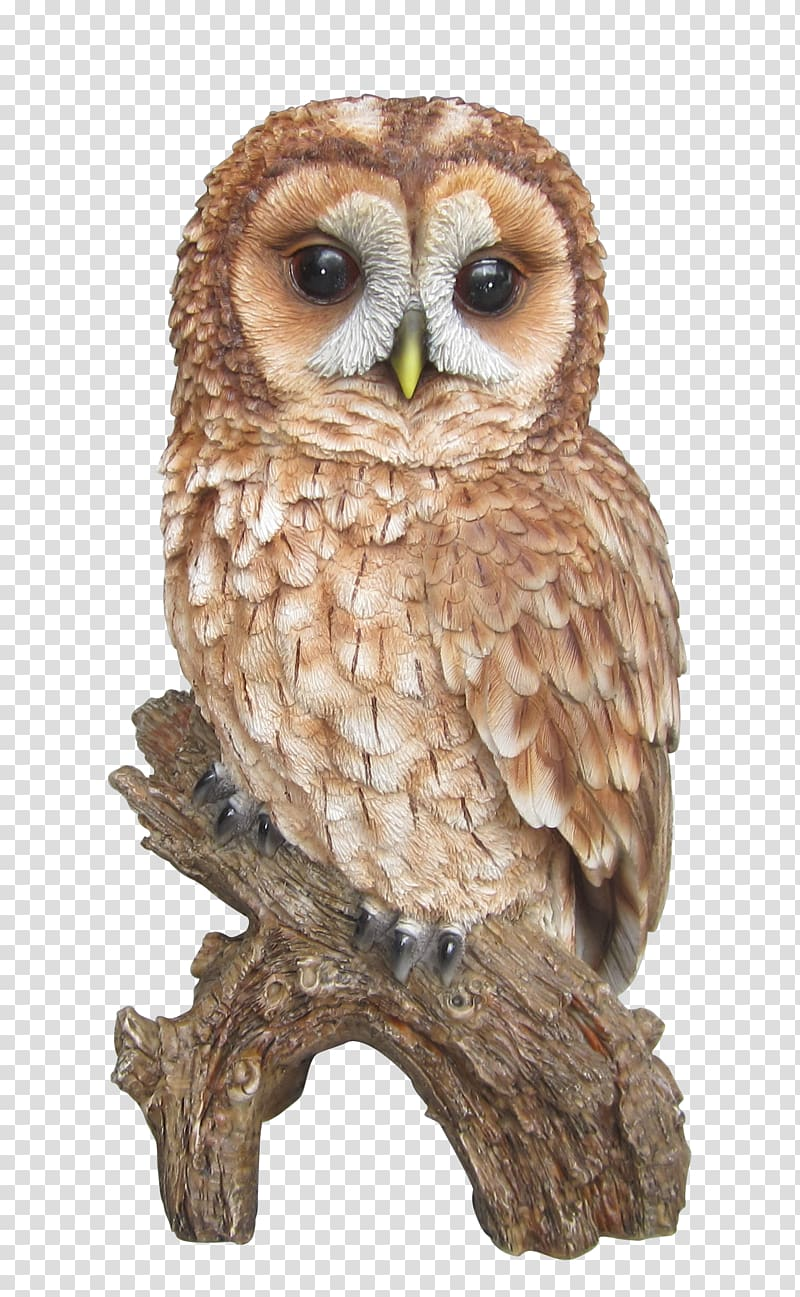 Brown owl illustration, Tawny owl Barn owl Barred Owl , tawny.