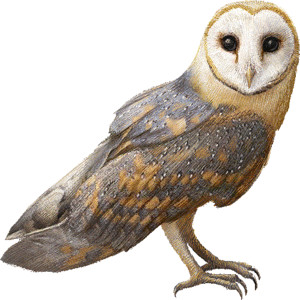 Barn Owl clipart graphics (Free clip art.