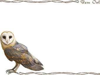 Barn Owl clipart graphics (Free clip art.