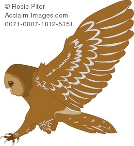Stock Clipart Illustration of a Barn Owl Landing.