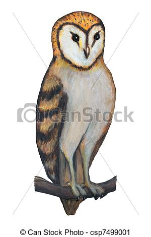Barn owl Illustrations and Clip Art. 127 Barn owl royalty free.