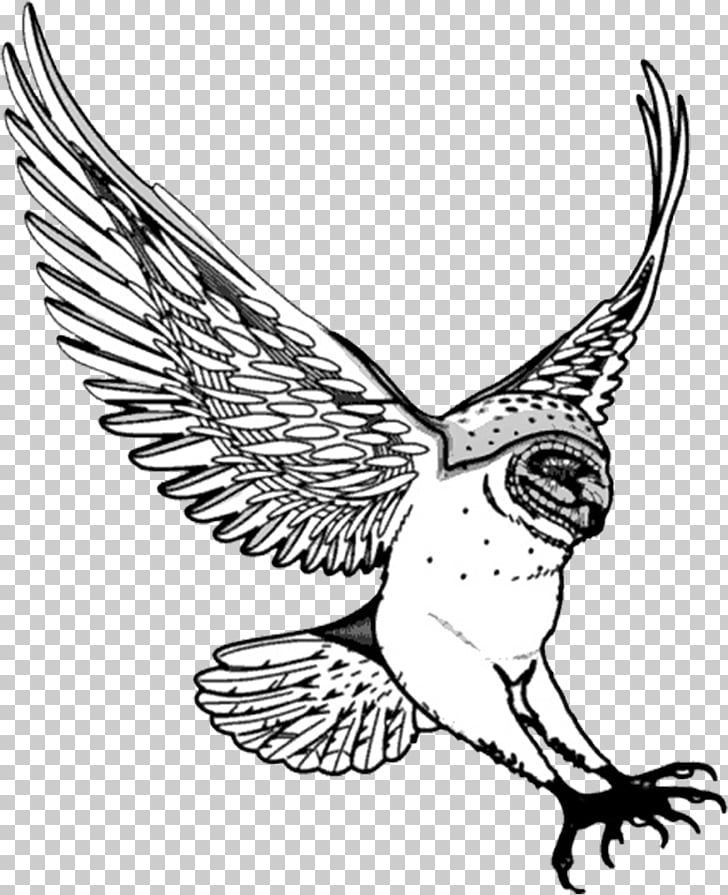 Barn owl Drawing , owls PNG clipart.