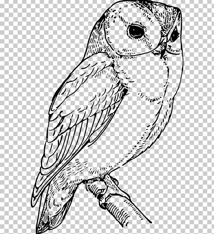 Barn Owl Drawing Coloring Book PNG, Clipart, Animals, Art.