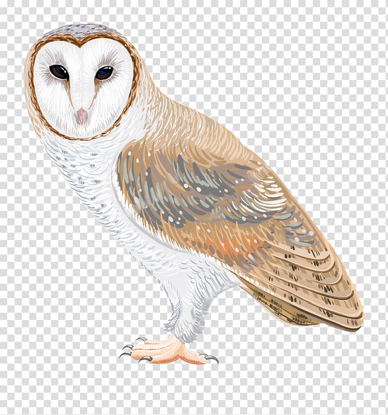 Barn owl Drawing , watercolor owl transparent background PNG.