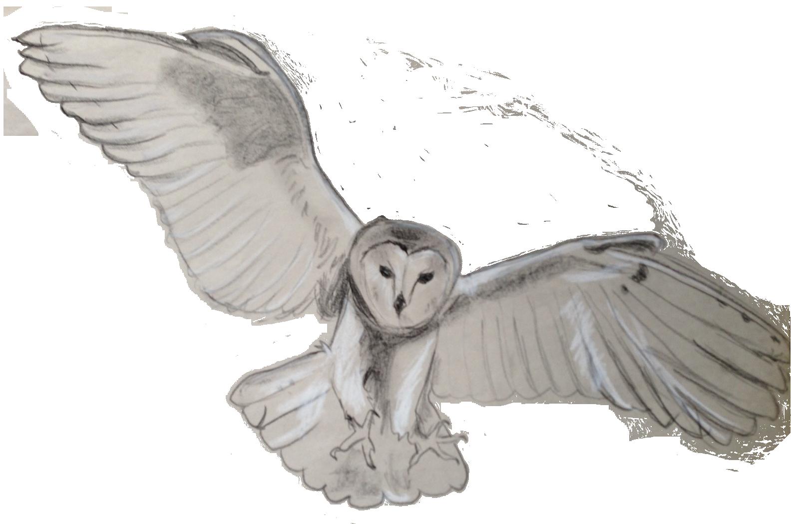 Tawny owl Bird Flight Barn owl.