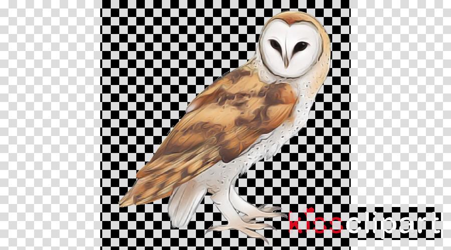 bird barn owl owl bird of prey beak clipart.