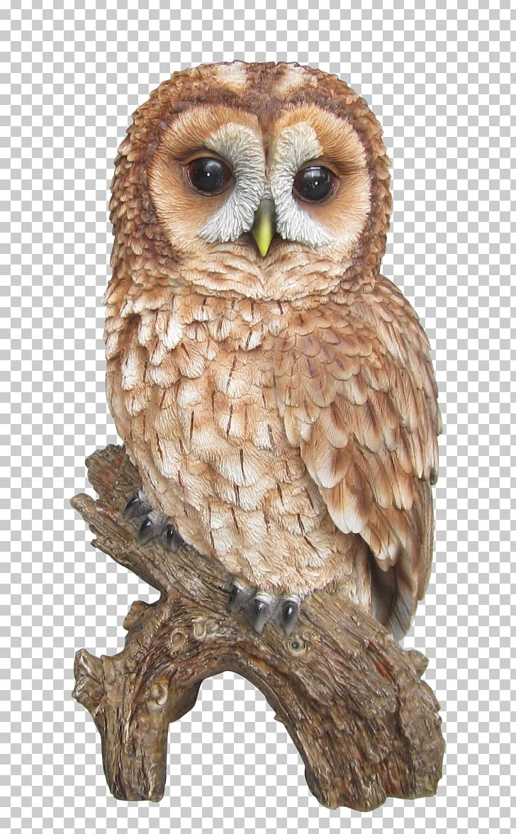 Tawny Owl Barn Owl Barred Owl PNG, Clipart, Amelia, Animal.
