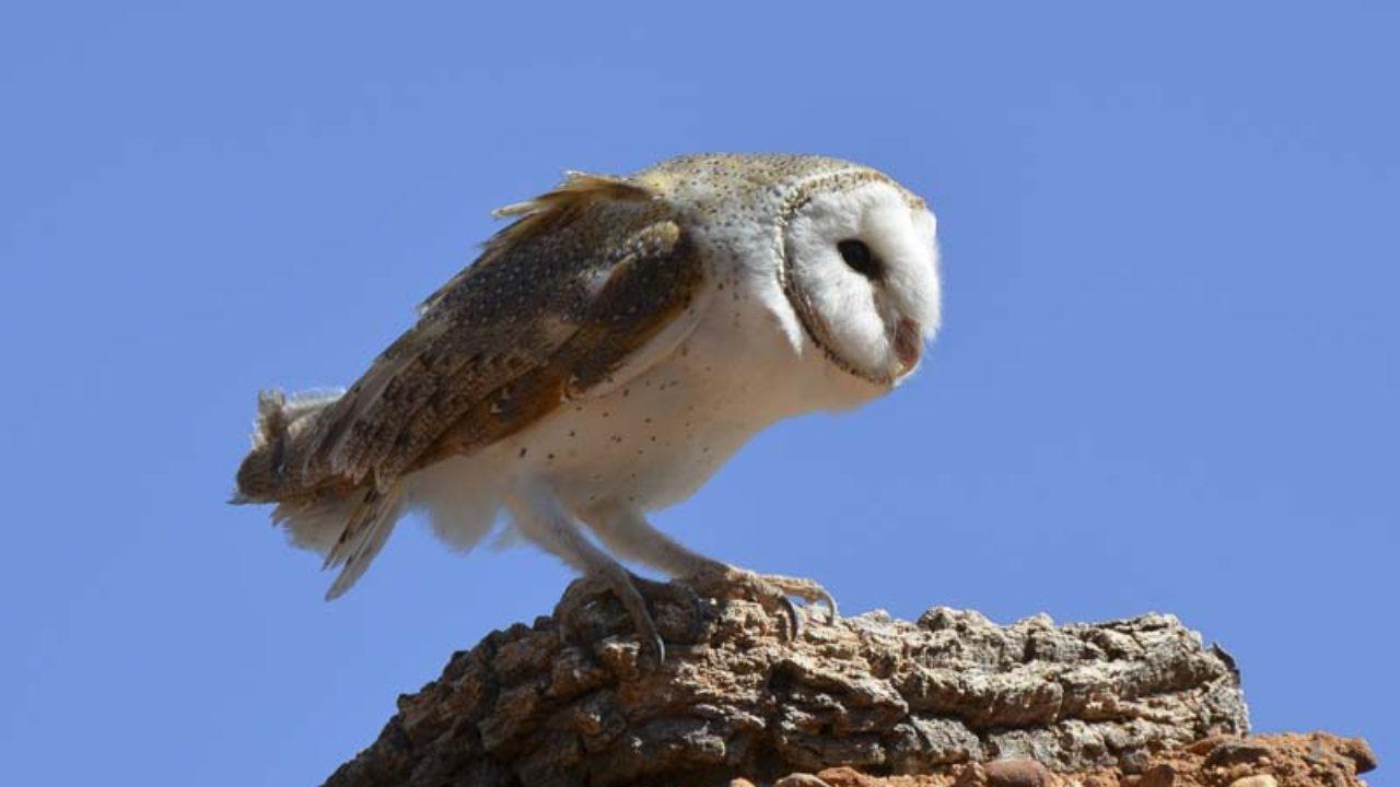 Owl Pellet Lab.