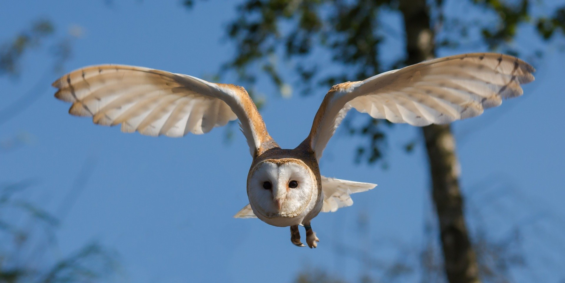 Best 15 Barn Owl Facts.