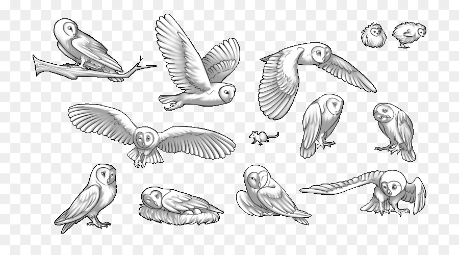 Swallow Bird.
