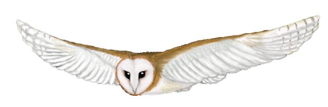 Free Cartoon Barn Owl, Download Free Clip Art, Free Clip Art.