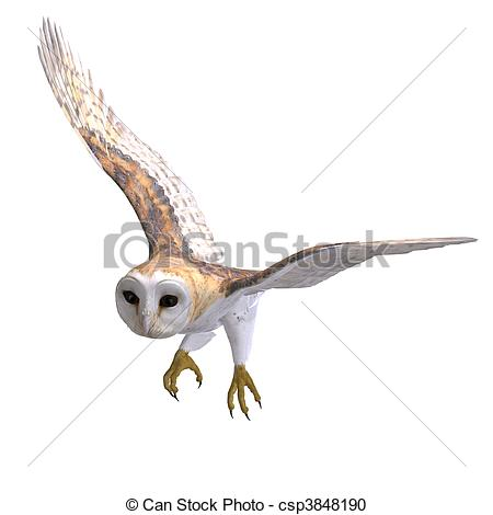 Stock Illustration of Barn Owl Bird. 3D rendering and shadow over.