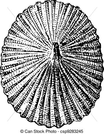 Clipart Vector of Barnacle or Lepas sp., vintage engraving.
