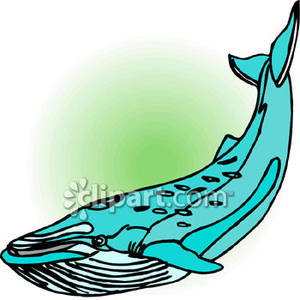 Blue Whale with Barnacles Royalty Free Clipart Picture.