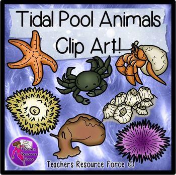 Tidal pool creatures clip art.