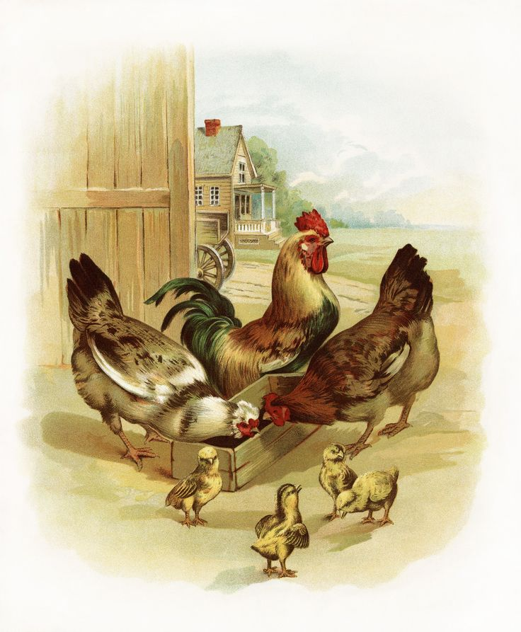1000+ ideas about Rooster Images on Pinterest.