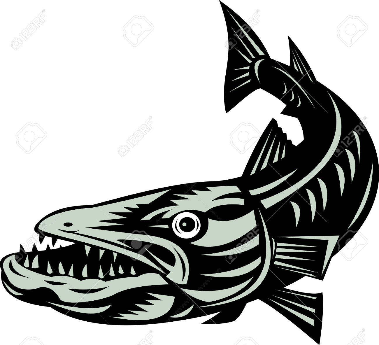 barracuda clipart #23.
