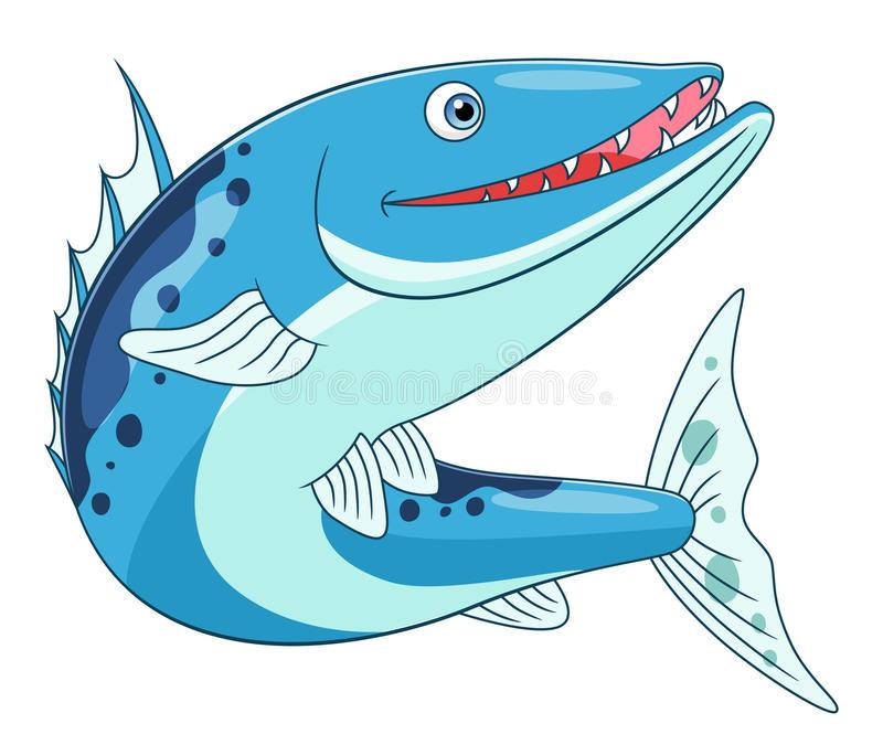 Barracuda Stock Illustrations.