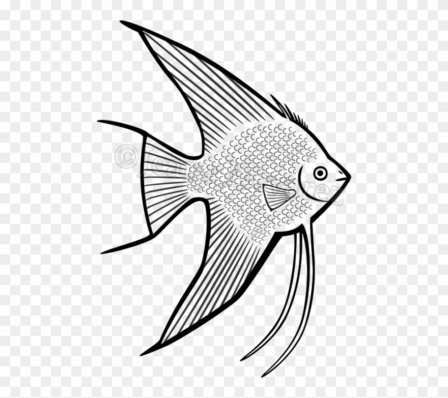 Walleye Vector Barramundi Fish.