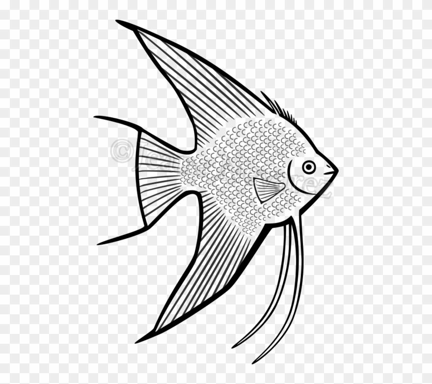 Walleye Vector Barramundi Fish.