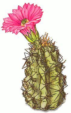 Woman cactus clipart.