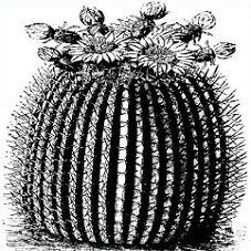 Free Barrel Cactus Clipart.