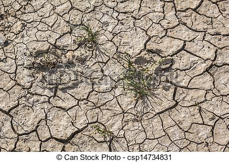 Stock Photos of Animal Footprints On Desolate Barren Dry Cracked.