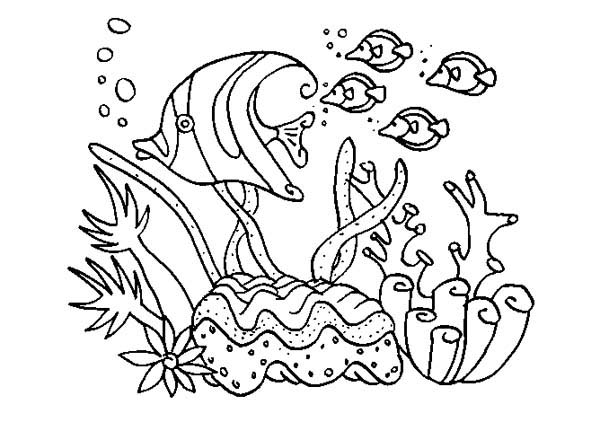coral reef fish underwater world coloring pages great.