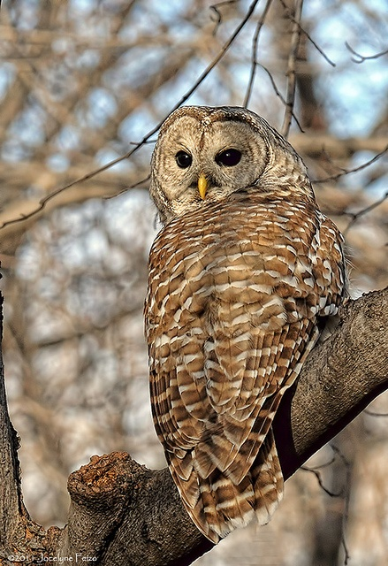 1000+ images about BIRDS ~ OWLS on Pinterest.