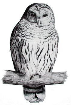 owl in flight drawing.