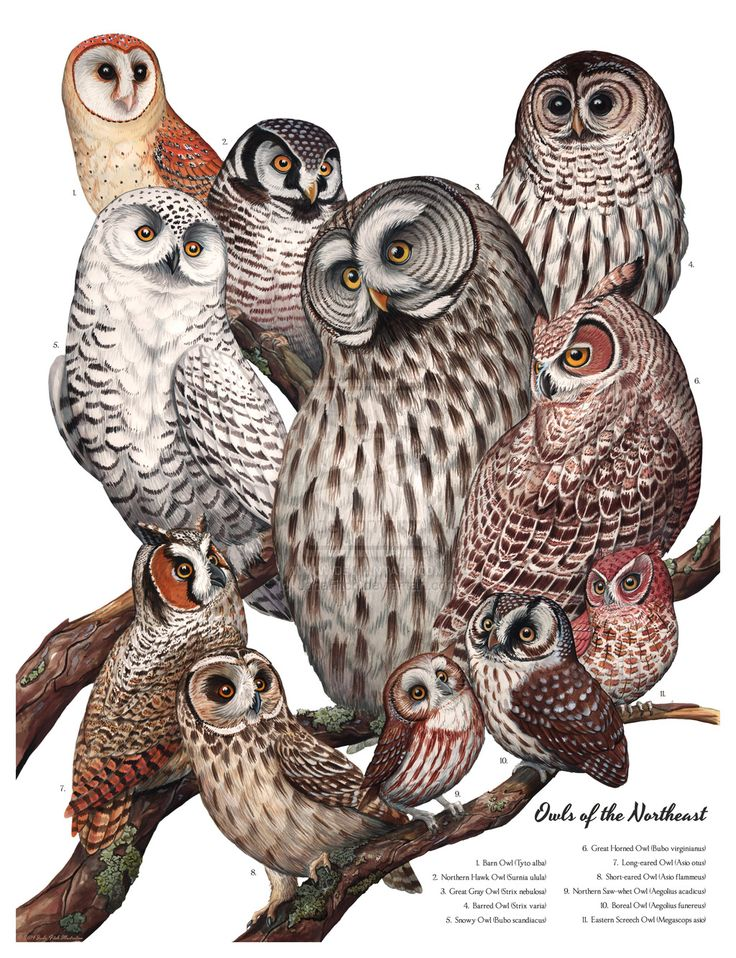 1000+ images about Athena's Gallery of Owls on Pinterest.