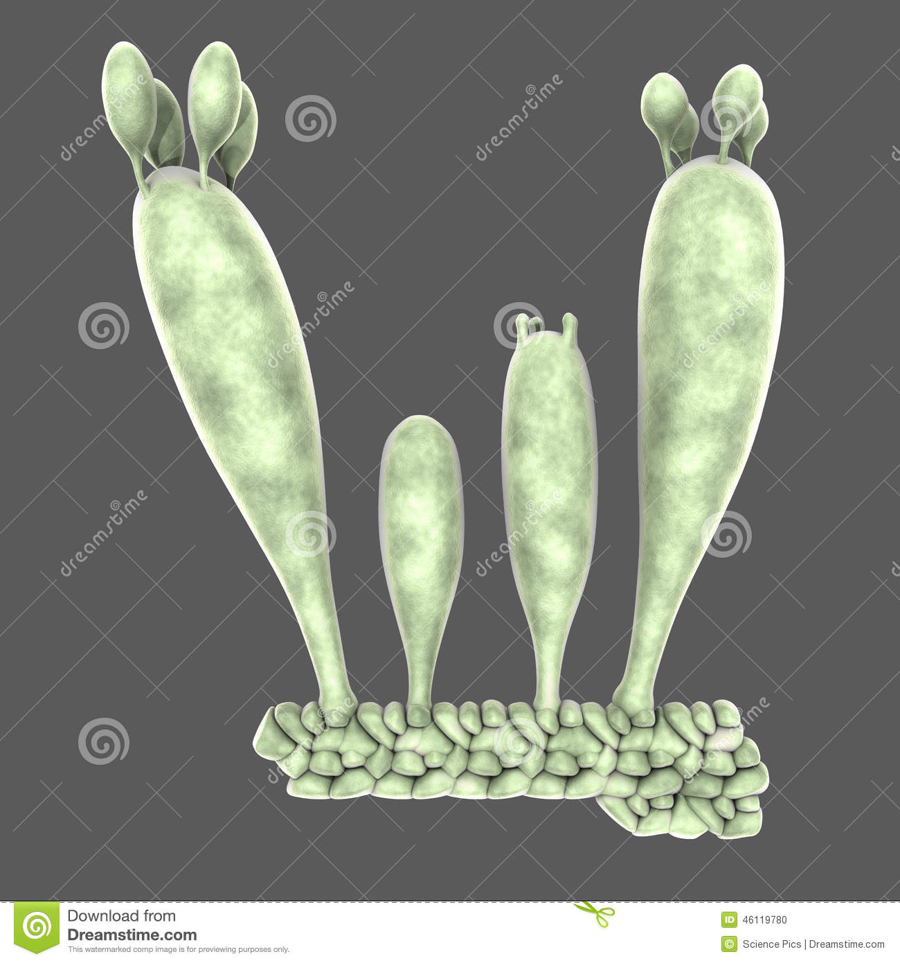 Basidiospores Stock Illustration.