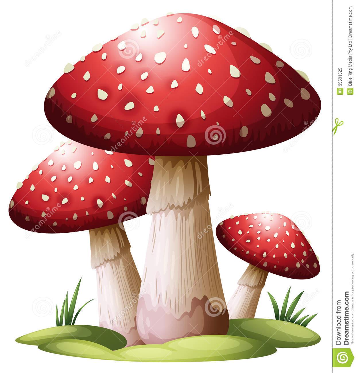 Red Mushroom Royalty Free Stock Photo.