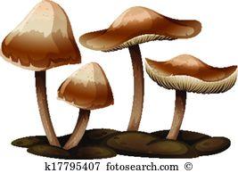 Basidiomycota Clipart Illustrations. 21 basidiomycota clip art.
